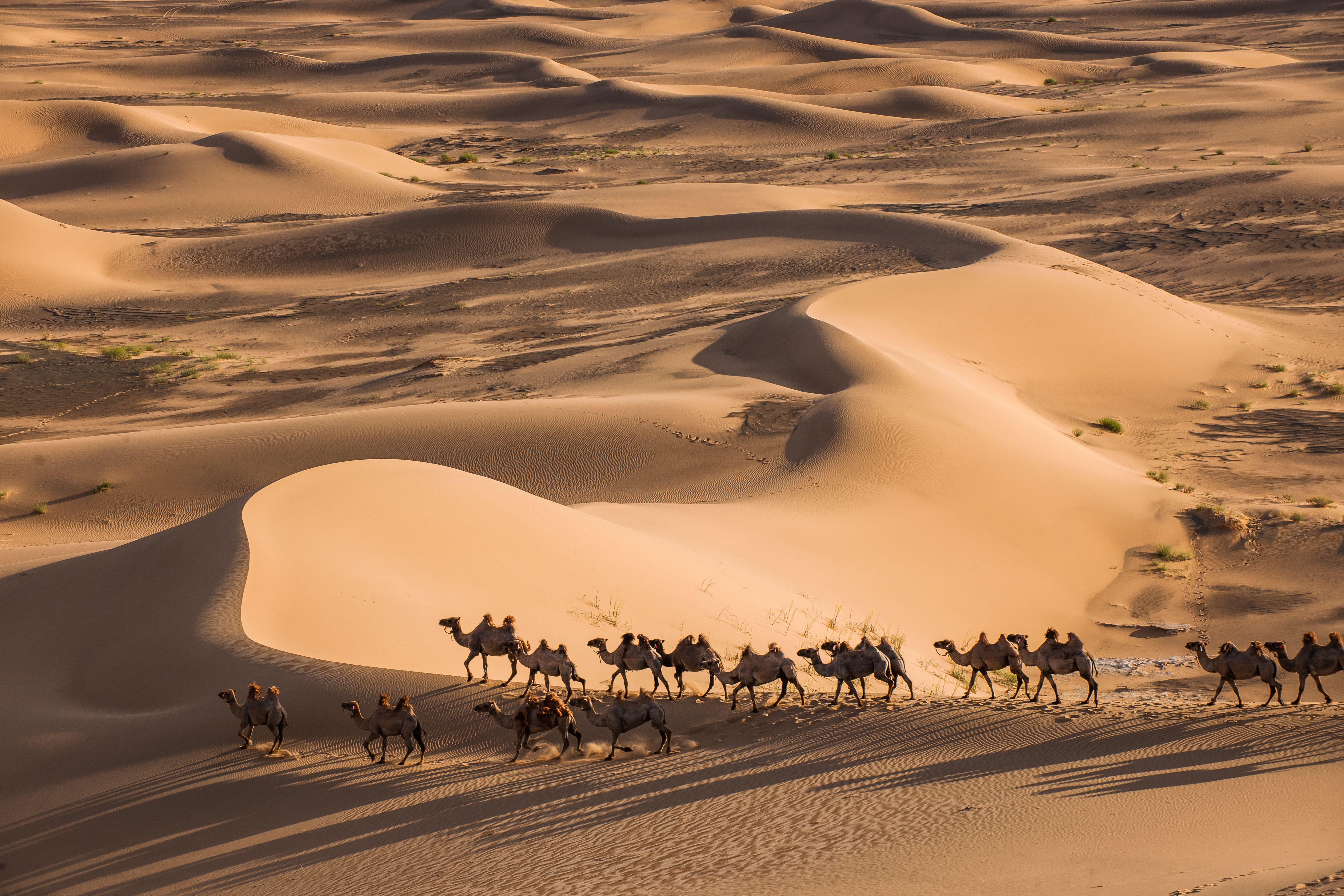 Khongor sand dunes (2).jpg