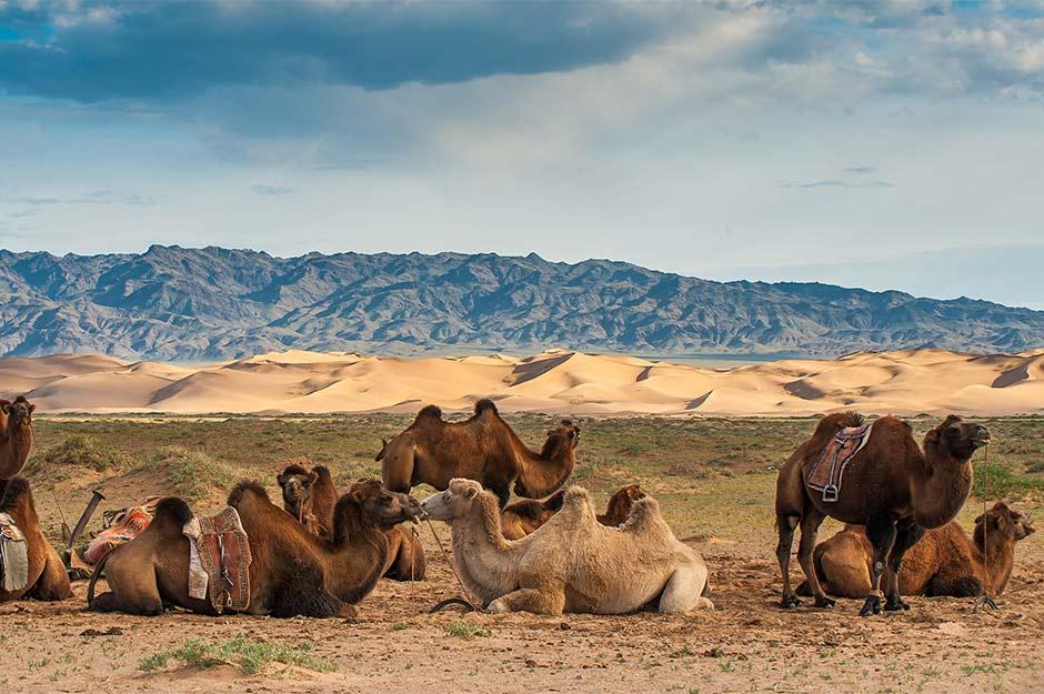Khongor-sand-dunes.jpg